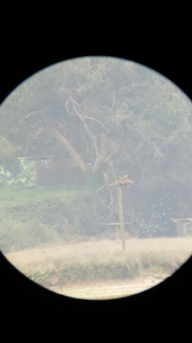 Osprey  - Ander Balandin Seoane
