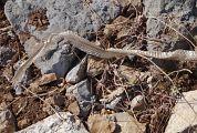 Reptile ind�termin� - Roland Wyssen